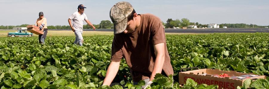 Contáctenos para una presentación sobre trabajadores agrícolas.