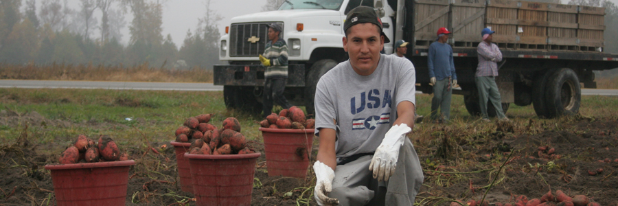 Welcome to the online home of the Farmworker Unit of Legal Aid of North Carolina