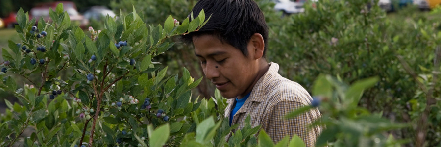 Learn about your rights as a North Carolina farmworker